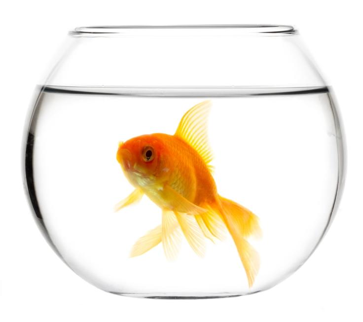 pesce-rosso-boccia-1